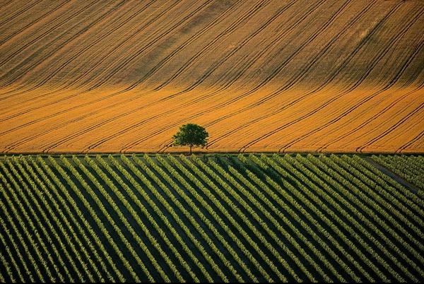 Сельскохозяйственный ландшафт возле города Коньяк, Франция