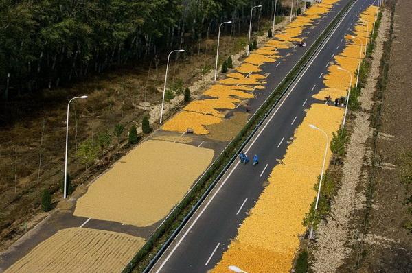 Китайцы сушат на трассе в окрестностях Пекина кукурузу