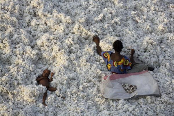 На уборке хлопка. Буркина-Фасо