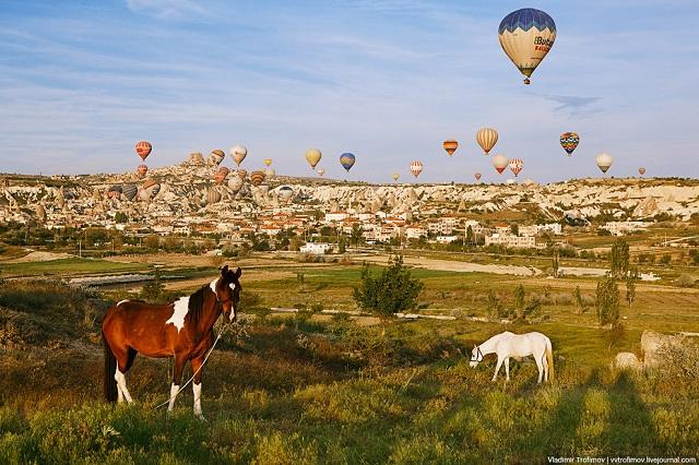 лошади турция